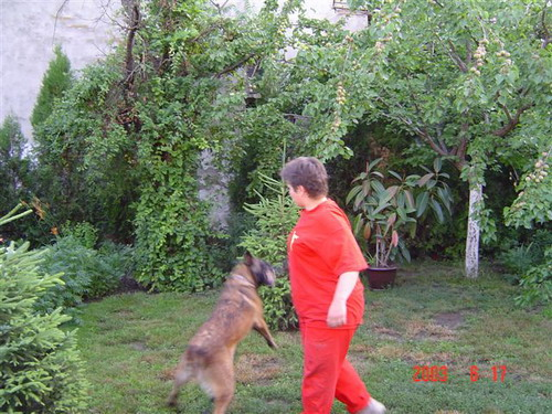 Mrazovac K9 - Personal Protection Dogs